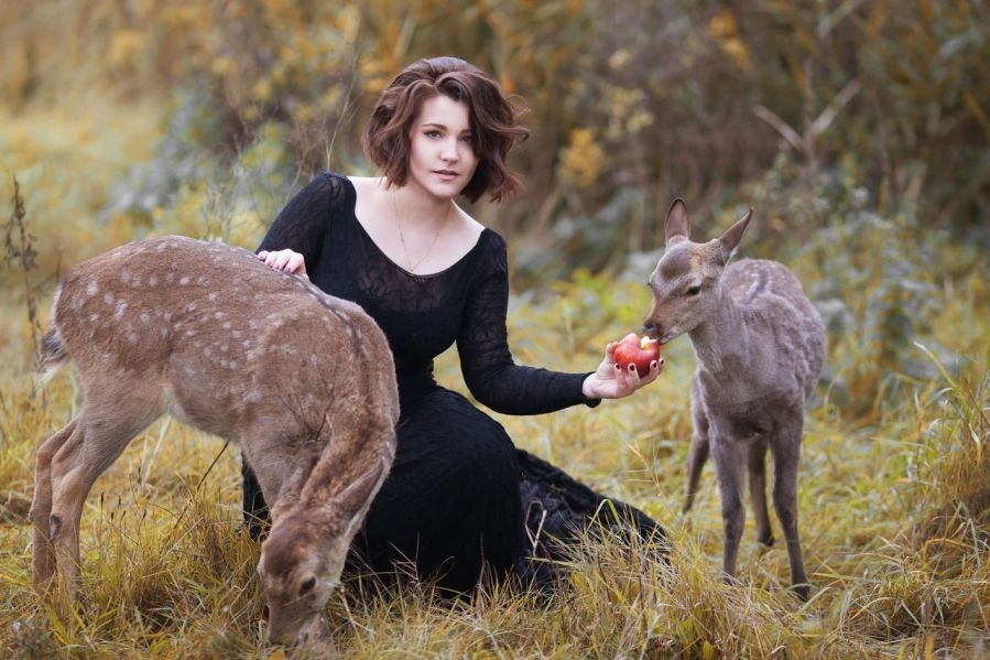 Baby deer for a photo session or for outside events