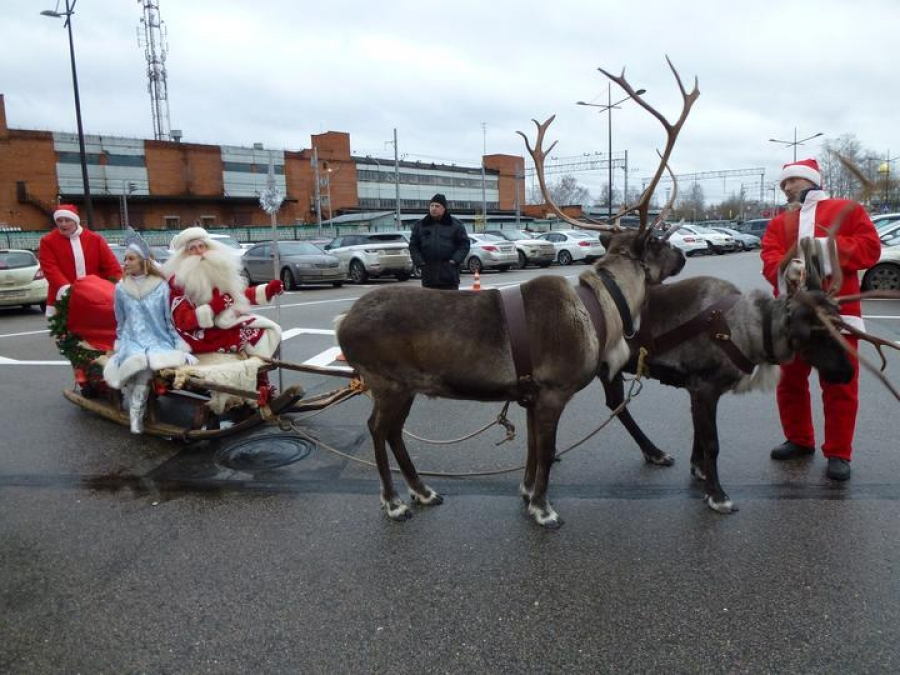 Reindeer sled riding
